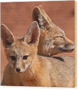 Kit Fox Pup Snuggling With Mother Wood Print