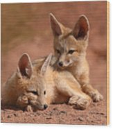 Kit Fox Pups On A Lazy Day Wood Print