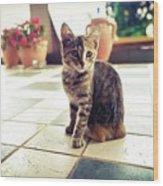 Kitcat Wood Print