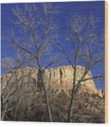 Kitchen Mesa And Bare Cottonwood Trees Wood Print