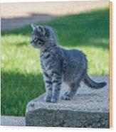 Kitten 1 Wood Print