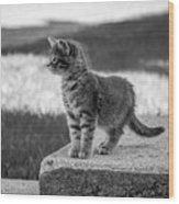Kitten 2 Wood Print