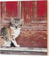 Kitten By Red Door Wood Print