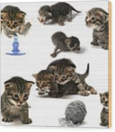 Kitten Collage Wood Print