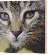 Kitten Curiosity Wood Print