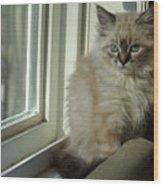 Kitten Daydreams Wood Print