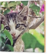 Kitten Hiding Out Wood Print