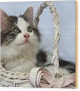 Kitten In Basket Wood Print