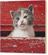 Kitten In Red Drawer Wood Print by Garry Gay
