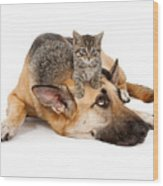 Kitten Laying On German Shepherd Wood Print