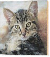 Kitten Looking Wood Print