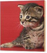 Kitten On Red Wood Print
