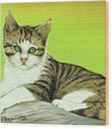 Kitten On Rock Wood Print