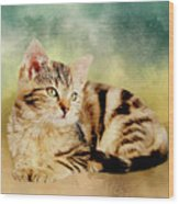 Kitten - Painting Wood Print