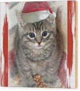 Kitten Playing Santa  Wood Print