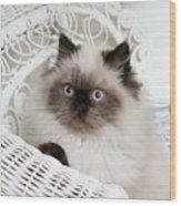 Kitten Portrait Wood Print