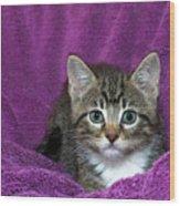 Kitten, Purr-fect In Purple Wood Print