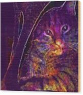 Kitten Red Cat Cat Tom Cat Pets  Wood Print