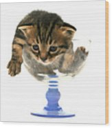 Kitten Sits In A Glass  Wood Print
