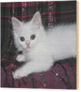 Kitten Snow White On Green And Pink Plaid Wood Print