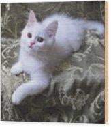 Kitten Snow White Silky Fur Wood Print