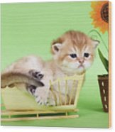 Kitten With Flover Wood Print