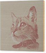 Kitten Wonder Wood Print
