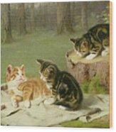Kittens Playing Wood Print