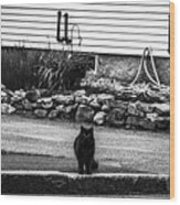 Kitty Across The Street Black And White Wood Print