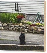 Kitty Across The Street  Wood Print