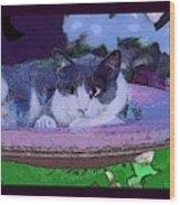 Kitty Blue Wood Print