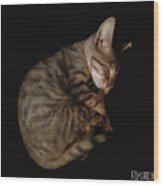 Kitty Cat Curls Up Wood Print