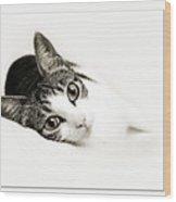 Kitty Cat Greeting Card Congratulations Wood Print