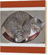 Kitty In A Bowl Wood Print