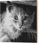 Kitty In Black White Wood Print