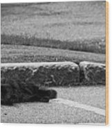 Kitty In The Street Black And White Wood Print