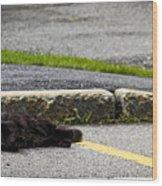 Kitty In The Street Wood Print