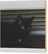 Kitty In The Window 2 Wood Print