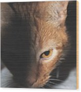 Kitty Wood Print