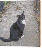 Kitty Kitty Kitty Wood Print