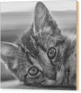 Kitty Nap Wood Print