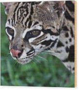 Kitty Ocelot 1 Wood Print