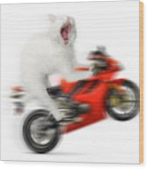 Kitty On A Motorcycle Doing A Wheelie Wood Print