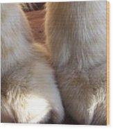 'kitty Paws' Wood Print