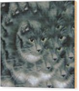 Kitty Portrait  Wood Print