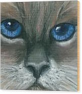 Kitty Starry Eyes Wood Print