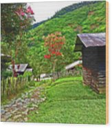 Kiwi Village Of Papua Wood Print