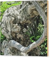 Knarly Man Wood Print