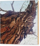 knarly Tree Wood Print