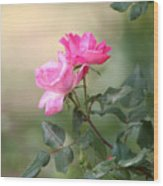 Knock Out Rose Wood Print